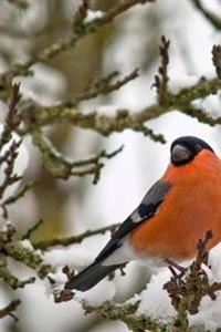 Male Bullfinch in Winter Journal: A Blank Lined Journal for Writing and Note Taking