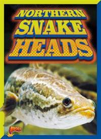 Northern Snake Heads