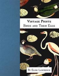 Vintage Prints: Birds and Their Eggs