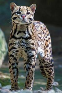 Ocelot Journal