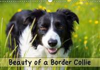 Beauty of a Border Collie 2018