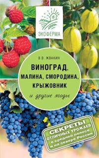 Vinograd, malina, smorodina, kryzhovnik i drugie jagody