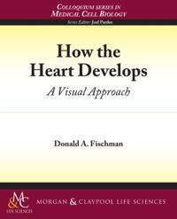 How the Heart Develops