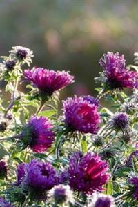Purple Asters in the Morning Autumn Flowers Gardening Journal: 150 Page Lined Notebook/Diary