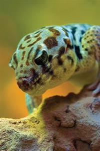 Wonder Gecko Any Day Planner Notebook: Blank Scheduler Organizer