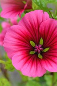Beautiful Pink Malva Mallow Flower Bloom in the Garden Journal: Take Notes, Write Down Memories in This 150 Page Lined Journa