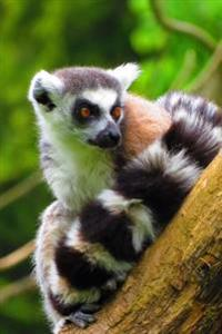 Charming Ring-Tailed Lemur Cute Animal Journal: 150 Page Lined Notebook/Diary