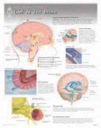 CFS & the Brain Wall Chart