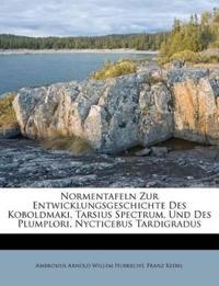 Normentafeln Zur Entwicklungsgeschichte Des Koboldmaki, Tarsius Spectrum, Und Des Plumplori, Nycticebus Tardigradus
