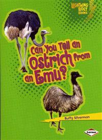 Can You Tell an Ostrich from an Emu?