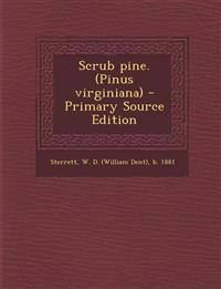 Scrub pine. (Pinus virginiana)