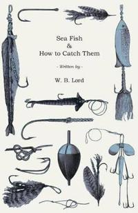 Sea Fish & How to Catch Them