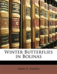 Winter Butterflies in Bolinas