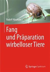 Fang Und Pr paration Wirbelloser Tiere