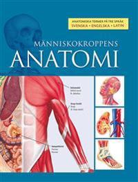 Människokroppens anatomi