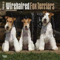 Wirehaired Fox Terriers 18-Month 2014 Calendar