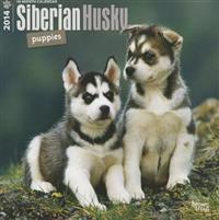 Siberian Husky Puppies 18-Month 2014 Calendar