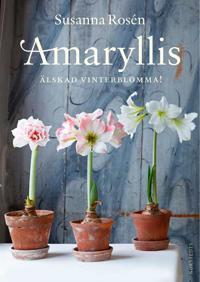 Amaryllis : älskad vinterblomma!