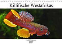 Killifische Westafrikas (Wandkalender 2019 DIN A4 quer)