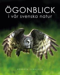 Ögonblick i vår svenska natur - Kenneth Olausson - inbunden (9789188181626)  | Adlibris Bokhandel