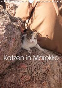 Katzen in Marokko (Wandkalender 2019 DIN A4 hoch)
