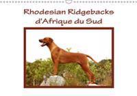 Rhodesian Ridgebacks d'Afrique du Sud 2019
