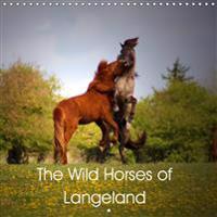 The Wild Horses of Langeland 2019