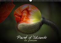 Pavot d'Islande en floraison 2019