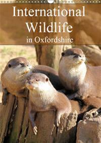 International Wildlife in Oxfordshire 2019