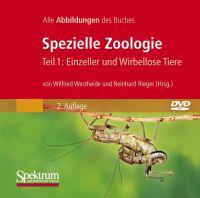 Bild-DVD, Spezielle Zoologie, Teil 1: Einzeller Und Wirbellose Tiere: Alle Abbildungen Des Buches
