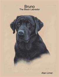Bruno - The Black Labrador