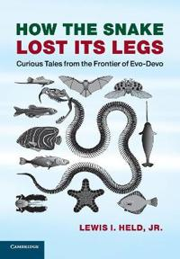 How the Snake Lost Its Legs