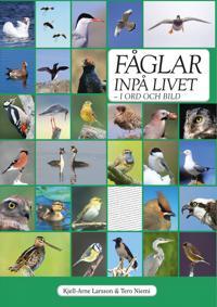 Fåglar inpå livet : i ord och bild