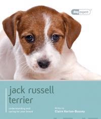 Jack Russell Terrior