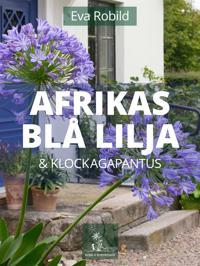 Afrikas blå lilja och klockagapanthus