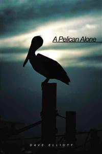 A Pelican Alone