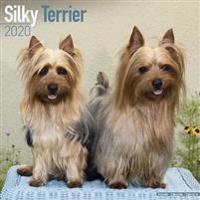 Silky Terrier Calendar 2020