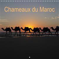 Chameaux du Maroc (Calendrier mural 2020 300 × 300 mm Square)