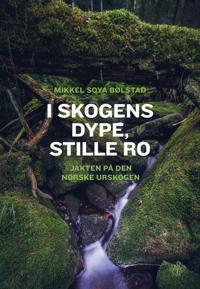 I skogens dype, stille ro - Mikkel Soya Bølstad | Ridgeroadrun.org