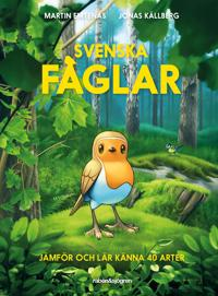 Svenska fåglar : jämför och lär känna 40 arter