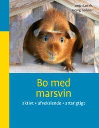 Bo med marsvin
