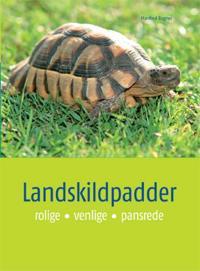 Landskildpadder