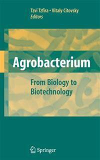 Agrobacterium