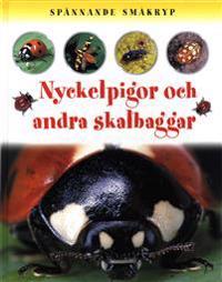 Spännande småkryp Nyckelpigor och andra skalbaggar