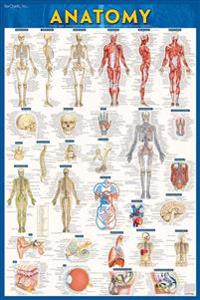 Anatomy Poster - Paper (24 X 36): A Quickstudy Reference Tool