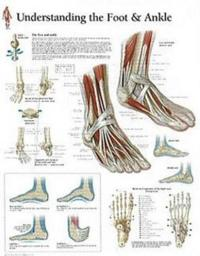 Understanding Foot & Ankle