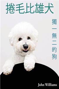 Bichon Frise - Dog in the Unique