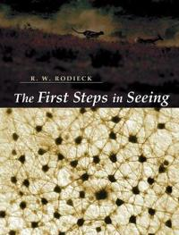 The First Steps in Seeing