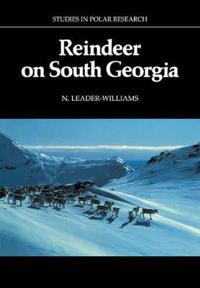 Reindeer on South Georgia
