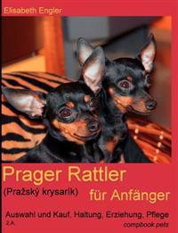 Prager Rattler (Pra Sk Krysar K) Fur Anf Nger